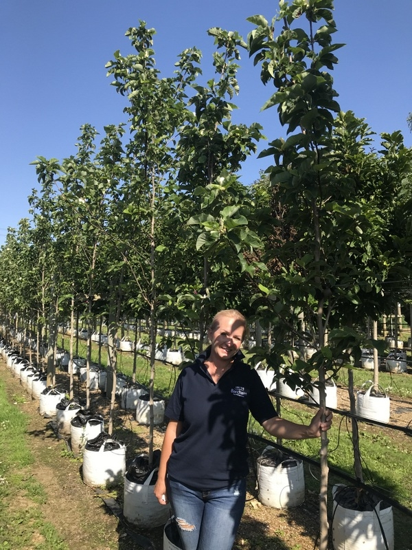 Magnolia denudata Yellow River at Barcham Trees