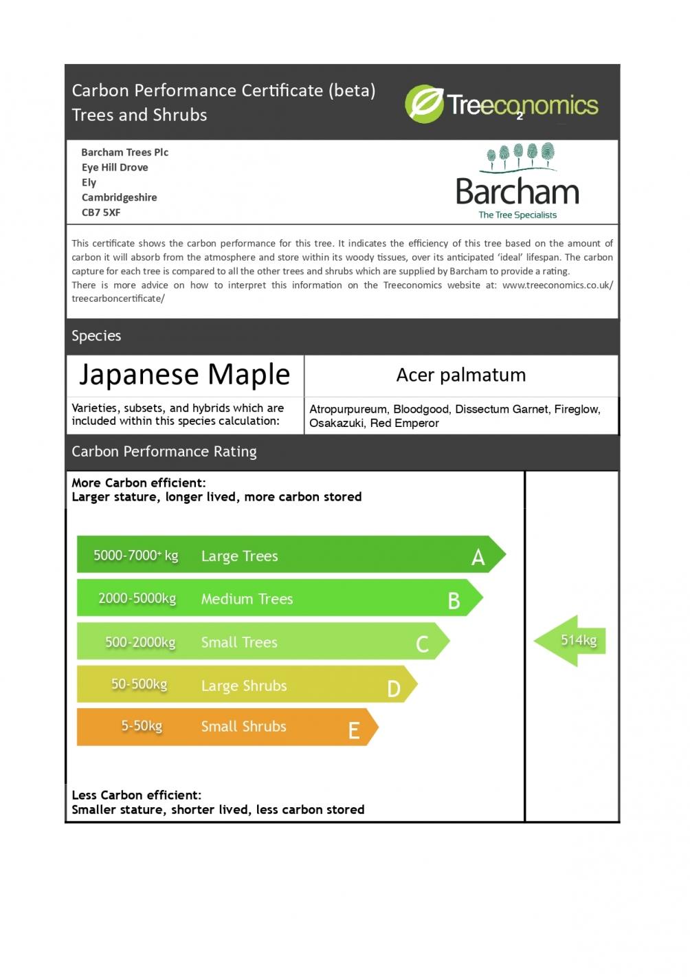 Acer palmatum Dissectum Garnet multi stem