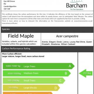 Carbon rating for Acer campestre